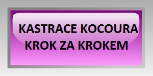 KASTRACE KOCOUR