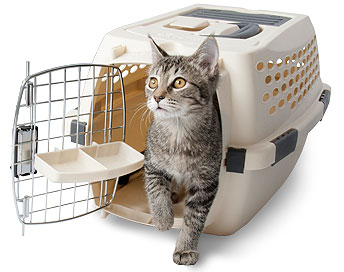 cat-kennel